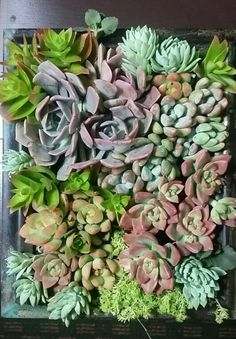 Awesome soft succulent wall.