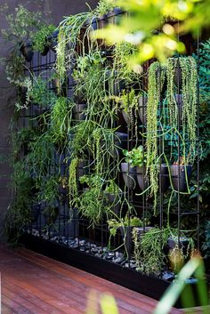 This green wall, located on the deck level of the courtyard, consists of a steel box frame with hand-thrown pots perched inside. Plants include varieties of mistletoe cactus (*Rhipsalis*) and string of pearls (*Senecio*).: [object Object]