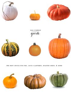 Your Ultimate Fall Pumpkin Guide