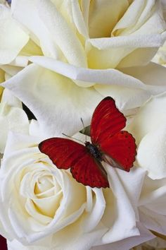 Let the butterflies fly ... in your stomach. Reach out for 3 FREE gems at http://www.butterflyhabits.com ... to reignite love.