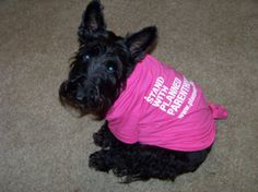 It's National Dog Day! Allow us to introduce PPGMR's mascot, Cootie, the Scottish Terrier.