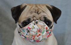 #pug #pugs #dog #pets #mask #maskchallenge #PPE #coronavirus #covid #staysafe #facemask #cute