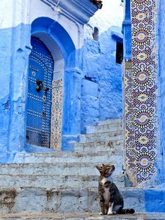 Chefchaouen - I truly appreciate Moorish architecture, and cats Travel Photography Inspiration, Travel Inspiration, Art Photography, Beautiful World, Beautiful Places, Blue Aesthetic, Belle Photo, Shades Of Blue, Scenery