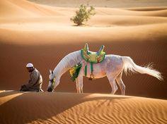 Kneeling Man and Horse Image, United Arab Emirates - National Geographic Photo of the Day