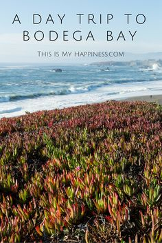 Scenes from a day trip to Bodega Bay, about one hour north of San Francisco on Northern California's ruggedly beautiful coast