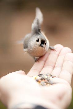 Pássaro. Alimento. Mão. Animais.