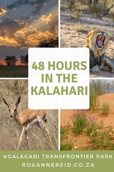48 hours in the Kalahari, Kgalagadi Transfrontier Park, South Africa