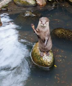 An Otter ~ The Playful Master of The Element of Water.