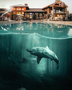 Surreal Collages by Hüseyin Şahin – Fubiz Media
