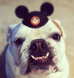 Disney Pets of the Month Club – February (12 photo slide show)
