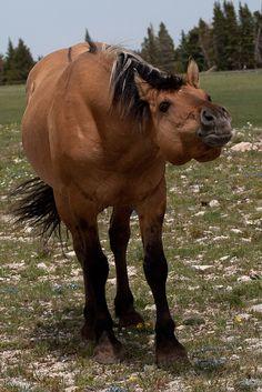 Wild Horse Photo - Jess Lee