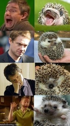 Martin Freeman VS. Hedgehog- one I haven't seen! I especially like grumpy Jawn second from top.