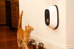 10 High-Tech Gadgets For Pet Lovers Cat Lady Confidential Pet Dogs, Dog Cat, Pets, Doggies, Crazy Cat Lady, Crazy Cats, Imagenes Free, Game Mode, Automatic Cat Feeder