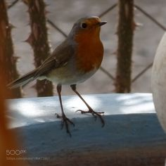Guest at the garden by sivriolcay58