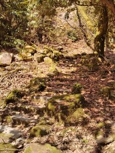 Forest path. Port Meirion.