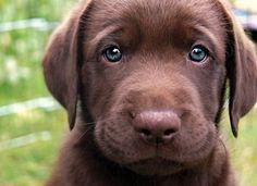 Puppy by Spicecake