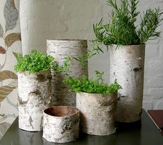 birch bark tubes, they're like vases!