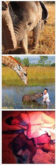 Welcome to ZEN - Zimbabwe Elephant Nursery at Wild is life