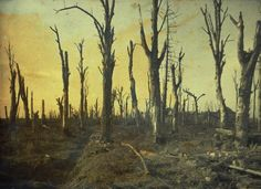the trees of the chateau. Dead trees. (Village of Noyon. Oise. France. 1917).