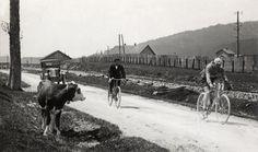 Buysse gadegeslagen door een koe Buysse passing a cow - 1926 Tour de France - Wikipedia, the free encyclopedia