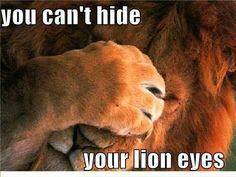 Eagles you can't hide your lion lying eyes