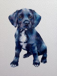 Watercolour commissioned pet portrait of a Labrador/springer spaniel cross by artist Jane Davies