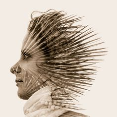 Palm Hegdehog by Ralph Clemens, via 500px