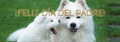 @PiensosElMadroo: ¡Buenos días #amigos! #FelizDíadelPadre