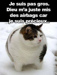 Funny pictures of fat dogs and cats car memes Memes Humor, Funny Animal Memes, Dog Memes, Cute Funny Animals, Funny Cats, Hilarious Sayings, Sarcasm Humor, Hilarious Memes, Funny Signs