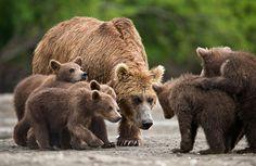 Невероятные фотографии медведей 23