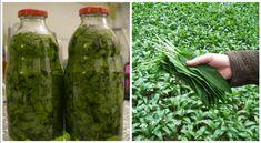 Korn, Pickles, Asparagus, Cucumber, Vegetables, Pickle, Vegetable Recipes, Zucchini, Pickling