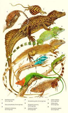 Asian lizards