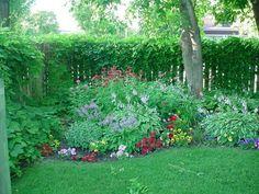 Hosta shade gardens