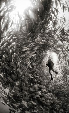Capturing the Wonder of the Sea in Stunning Black and White. Underwater photography never gets old. It provides a look at a world most of us only dream of exploring. Anuar Patjane provides an intimate look at this wondrous place in Underwater Realm