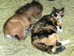 Just a baby horse and a cat