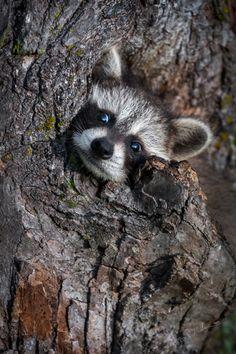 beautiful-wildlife:  A Little Stuck?byGeoffrey Kuchera