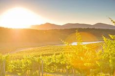 Spring arrives in #Biltmore's vineyards. www.biltmore.com