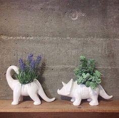 two little dinos. Image credit @mrsarronax #tigerstores #dinosaurs #plantpots…