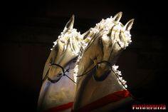 Carnevale...Palazzolo Acreide...2014 #oraziopuccio #carnevale #carnevale_2014 #2014 #Palazzolo #Palazzolo_Acreide #Sicilia #Sicily #cavalli #cartapesta #scienziato #carro_allegorico #fine_art #nikon #nikon_d3100 #festa #colore #celebrazione #carnival #sfondo #divertimento #felice #decorazione #birthday #mask #colorato #costume #party #vacanze #palloncino #venice #festeggiare #sagomare #coriandoli #circo #avvenimento #nuovo #festivo #PHOTO #photography