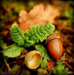 The acorns are falling like little brown tears. Description from pinterest.com. I searched for this on bing.com/images