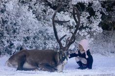 reindeer | home reindeer reindeers animal pictures pics and animal wallpapers ...