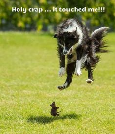 funny_dog_images