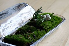 Succulent terrarium in a glass butter dish.  I saw these butter dishes at Rite Aide store.