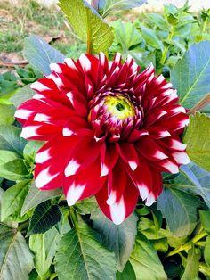 Garden, Flora, Nature, Flower, Garden, Leaf #garden, #flora, #nature, #flower, #garden, #leaf