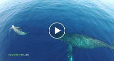 Drone Sobre o Oceano Capta Momento Simplesmente Maravilhoso http://www.funco.biz/drone-sobre-oceano-capta-momento-simplesmente-maravilhoso/