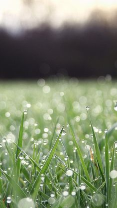 Grass water drop #iPhone #5s #Wallpaper | Welcome to pick out the favorite as your iPhone wallpaper.