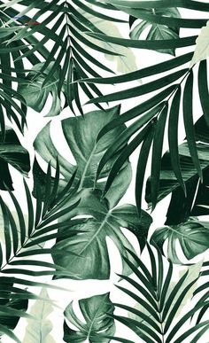 wallpaper Tropical jungle leaf pattern 4 societyiphone wallpaper Tropical jungle leaf pattern 4 society Millions of unique designs by independent artists. Tropical Garden II Canvas Art Print by Burcu Korkmazyurek Leaves Wallpaper Iphone, Plant Wallpaper, Tropical Wallpaper, Wallpaper Backgrounds, Screen Wallpaper, Iphone Backgrounds, Wallpaper Desktop, Wallpaper Ideas, Palm Leaf Wallpaper