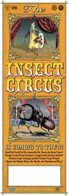 Insect Circus