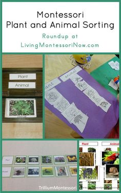Montessori resources for teaching preschoolers the differences between plants and animals