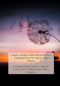 Fodor Ákos: Vígrendeletek Voldemort, Haiku, Buddhism, Einstein, Life Quotes, Disney, Quote, Quotes About Life, Quote Life